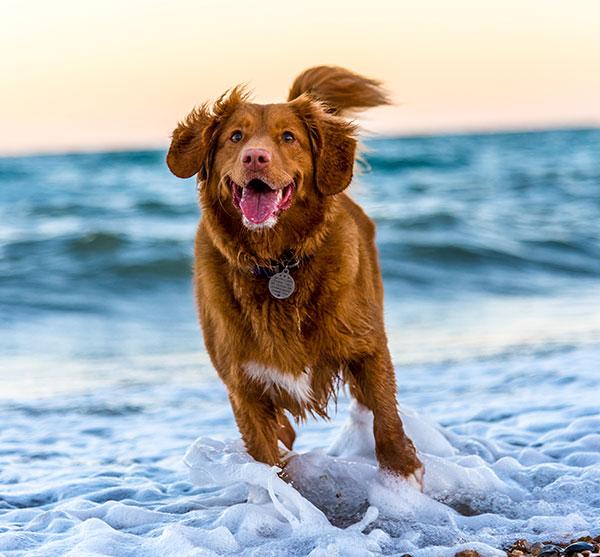 chien qui coure dans l'eau