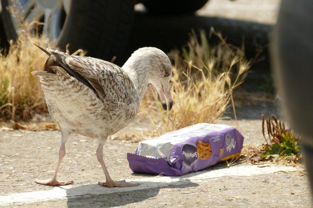 oiseau marin et plastique