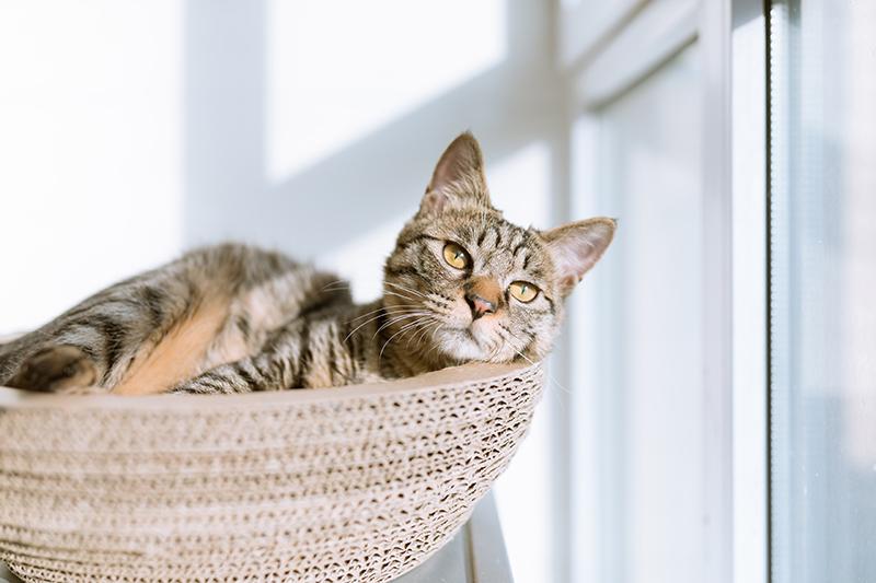 Chat en bord de fenêtre