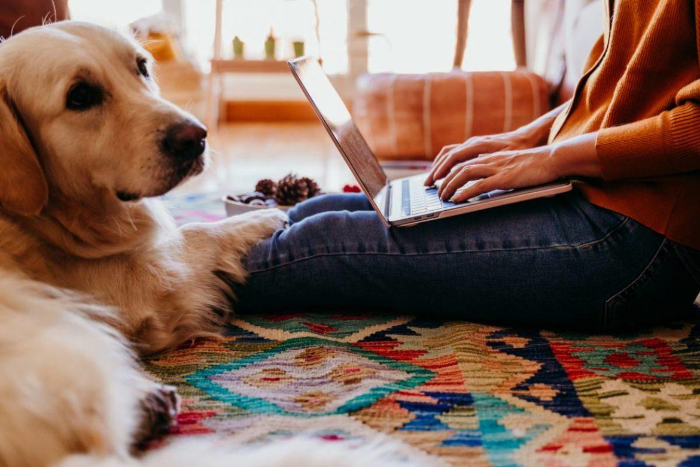 technologie avec animaux