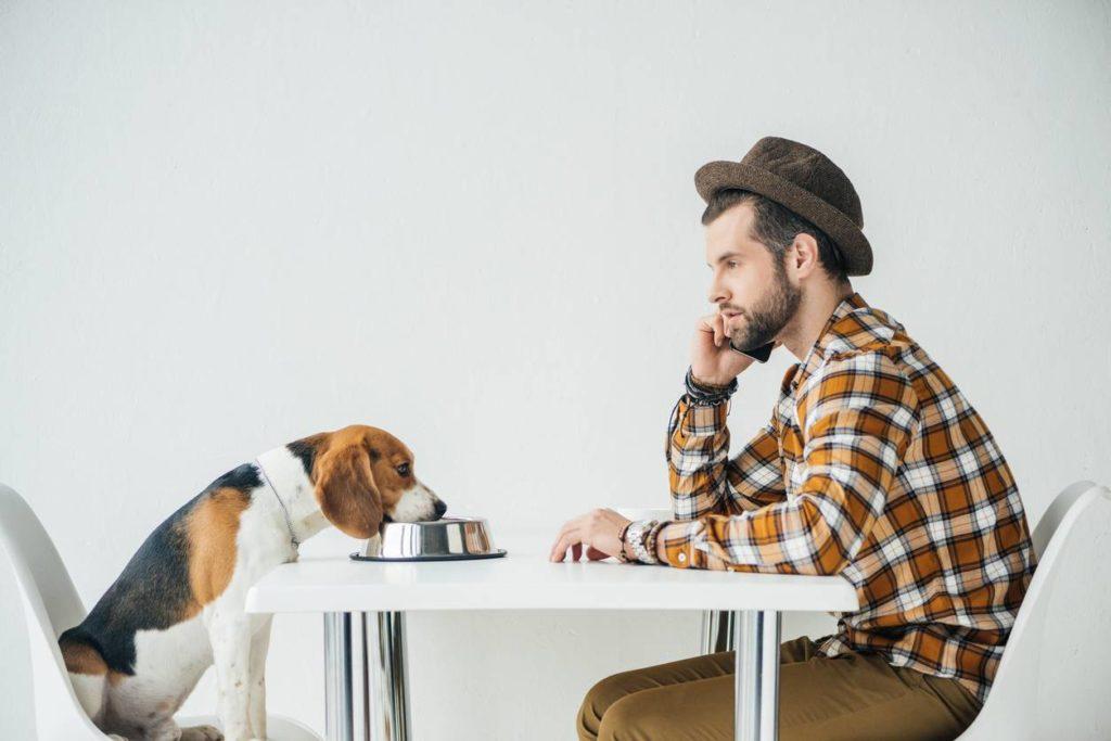 chien avec gamelle connectée