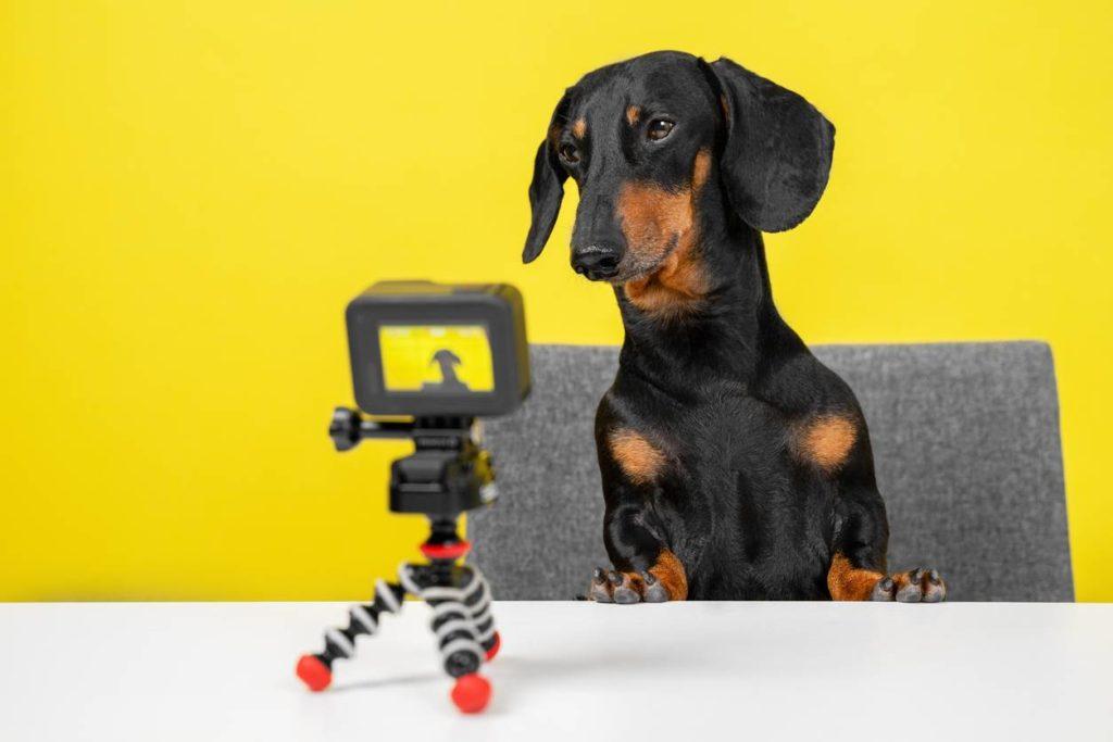 chien avec caméra