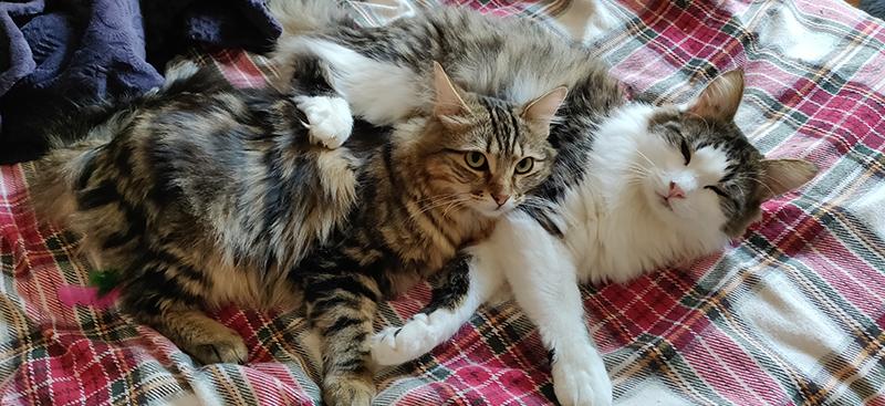 Adopter un chat ou un chaton