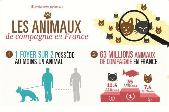 Infographie animaux de compagnie