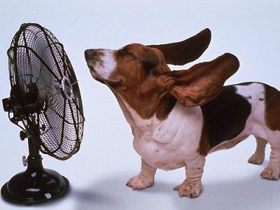 coup de chaleur pour le chien - Animaniacs