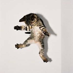 Les chats retombent sur leurs pattes