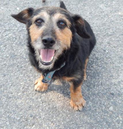 Tifus, chien à adopter d'urgence