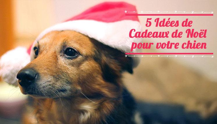 Idées de cadeaux de Noel pour chien