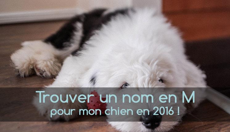 Nom de chien en M pour 2016