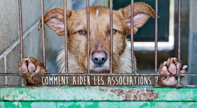 Comment aider les associations de protection animales
