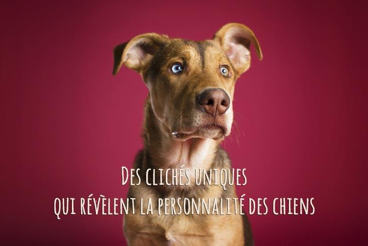 Photos uniques de chiens