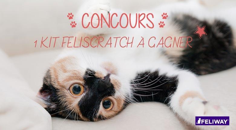 concours feliscratch