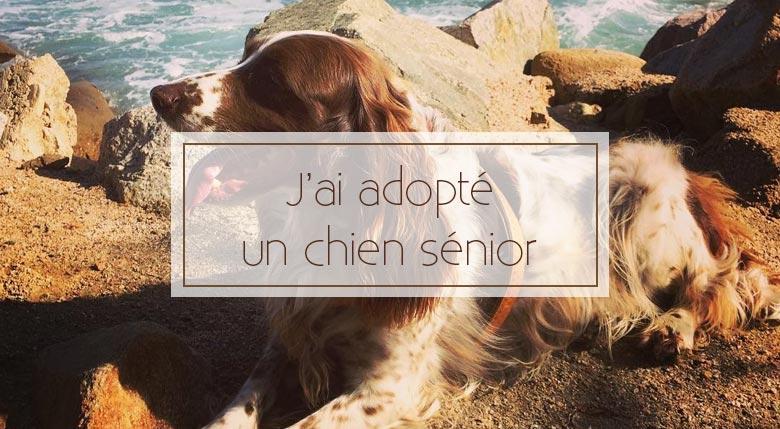 J'ai adopté un vieux chien : témoignage d'Albin