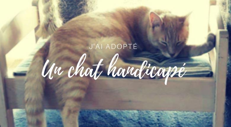 J'ai adopté un chat handicapé