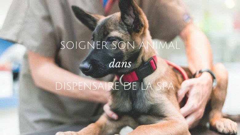 clinique vétérinaire dispensaire