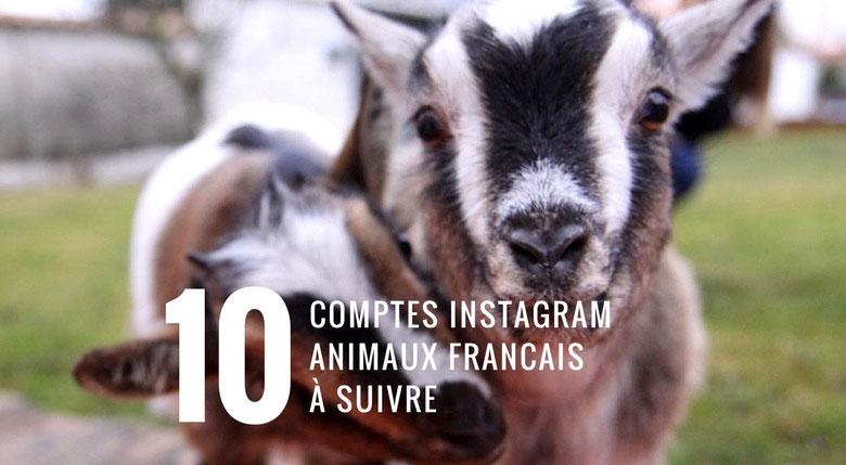 compte instagram animaux à suivre