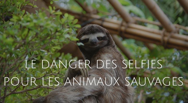 danger des selfies pour les animaux
