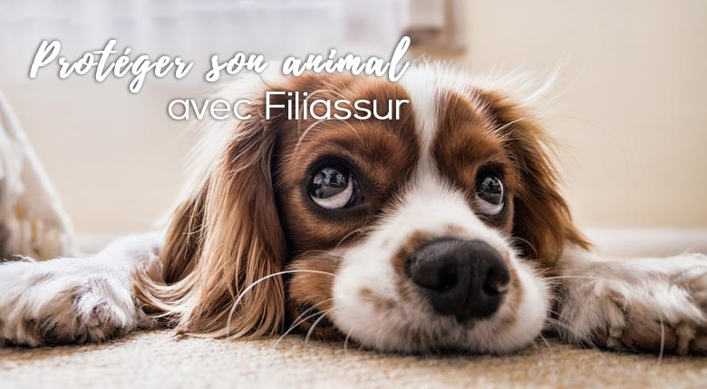 Protéger son animal de compagnie avec Filiassur
