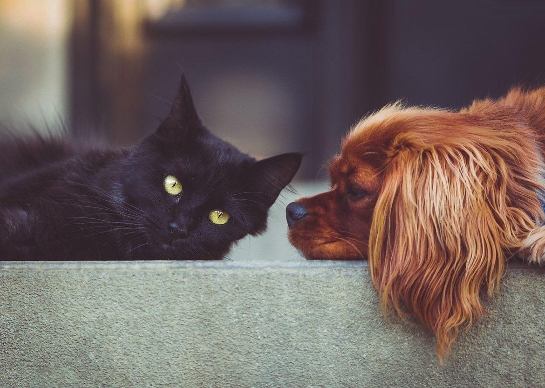 Chat noir et chien allongés